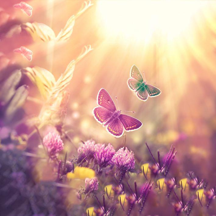 baskılı fon perde yonca çiçekleri üzerinde mor renkli kelebek desenli