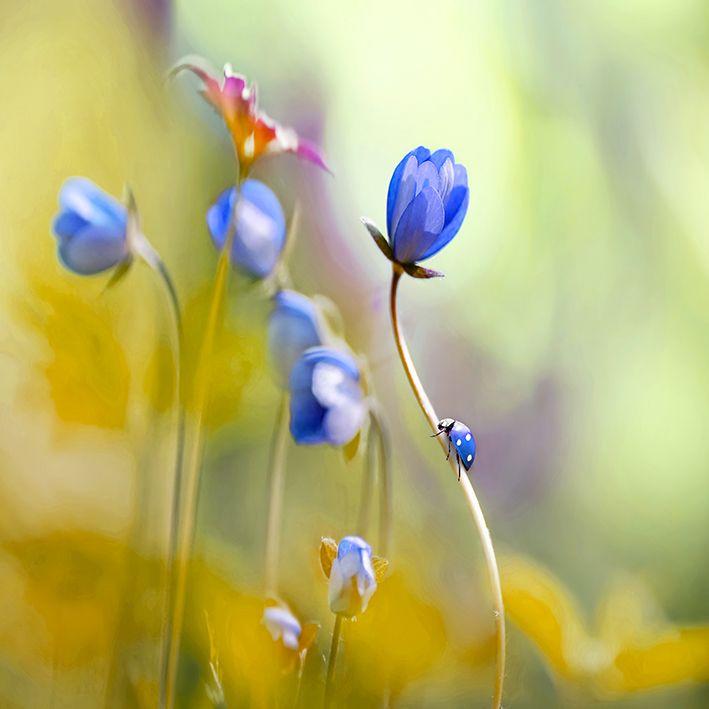 baskılı fon perde yumuşak odaklı lila anemon çiçek desenli