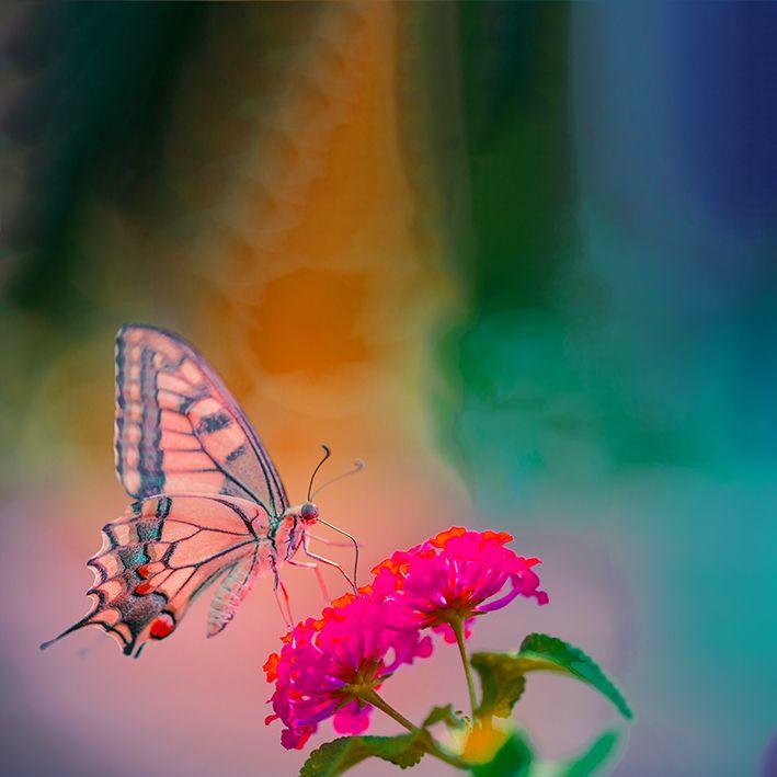 baskılı fon perde yumuşak odaklı pembe çiçek üzerine kelebekli desen
